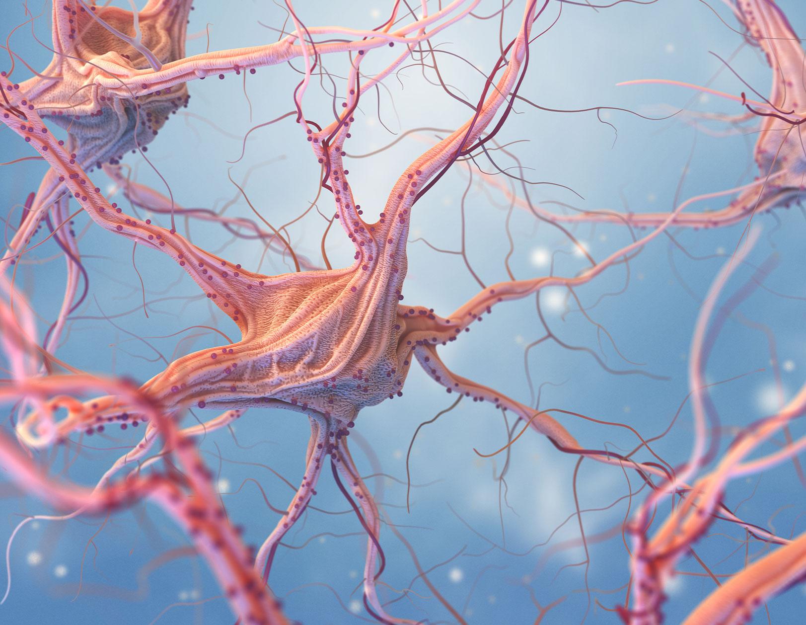 sistema-nervioso-content